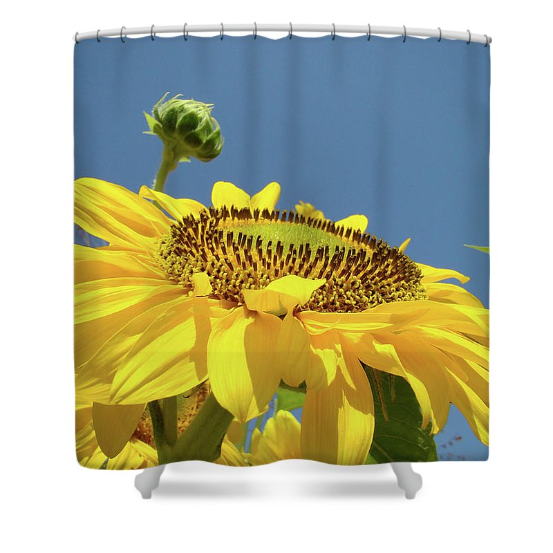 Sunflower Shower Curtain featuring the photograph Sun Flowers Summer Sunny Day 8 Blue Skies Giclee Art Prints Baslee Troutman by Baslee Troutman