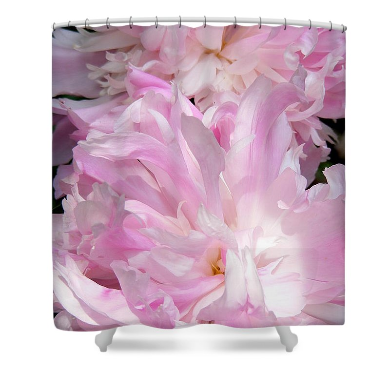 Sun Lit Peonies Shower Curtain featuring the photograph Sun Lit Peonies by Ed Smith
