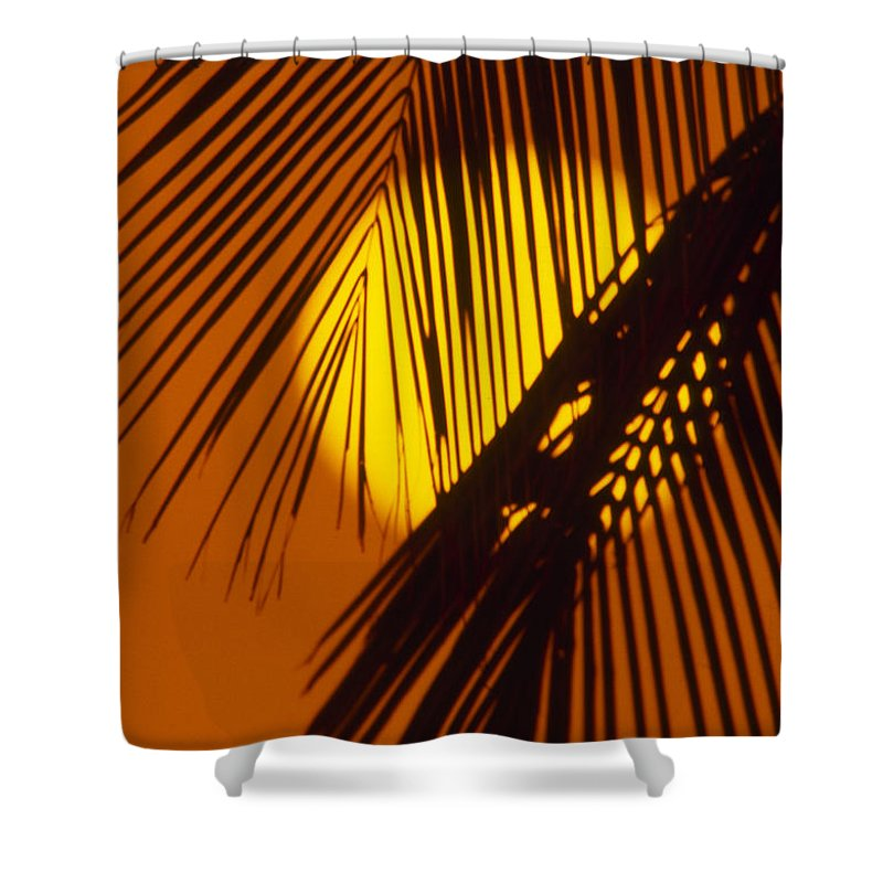 Bright Shower Curtain featuring the photograph Sun Shining Through Palms by Ron Dahlquist - Printscapes