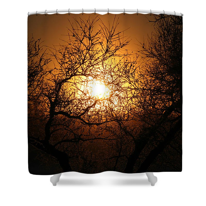 Sun Rise Trees Yellow Gold Plants Shine Colorful Bright Sky Shower Curtain featuring the photograph Sun Trees by Andrea Lawrence
