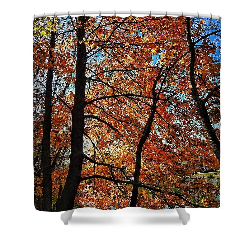 Shower Curtain featuring the photograph Sun Trees by Renee Longo