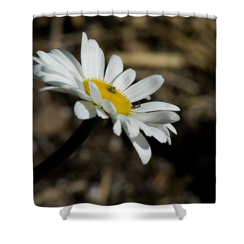 Flower Shower Curtain featuring the photograph Sunbathing On A Daisy by Martha Johnson