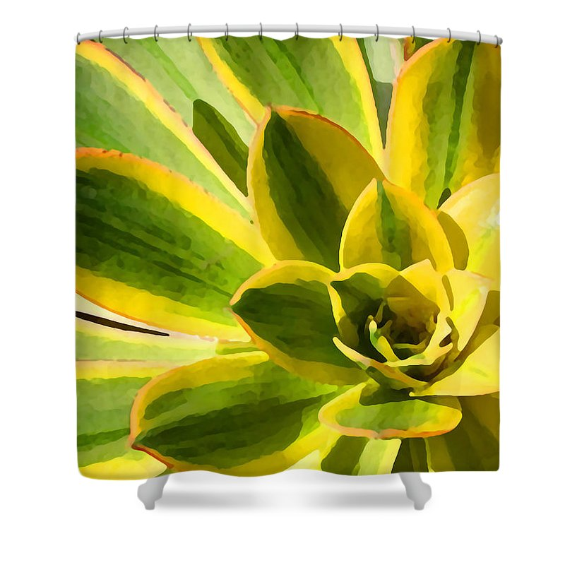 Landscape Shower Curtain featuring the photograph Sunburst Succulent Close-up 2 by Amy Vangsgard