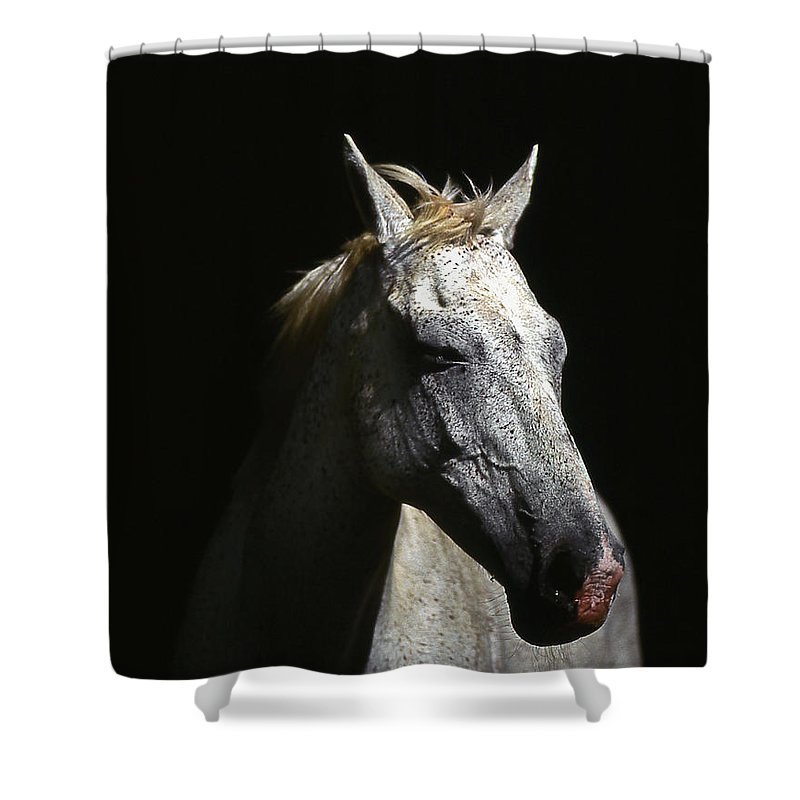 Horse Shower Curtain featuring the photograph Sundance by Jim Cazel