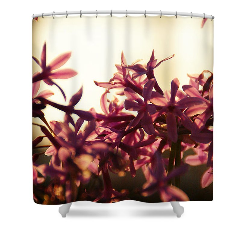 Sunlight Shower Curtain featuring the photograph Sundance by Linda Shafer