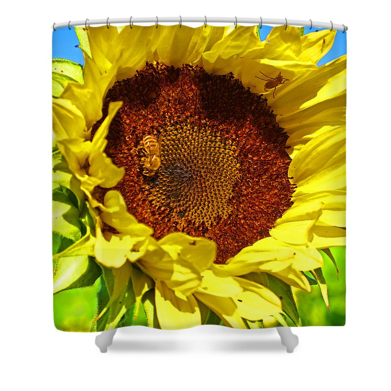 Pastoral Shower Curtain featuring the photograph Sunflower And Bee by Heather Coen