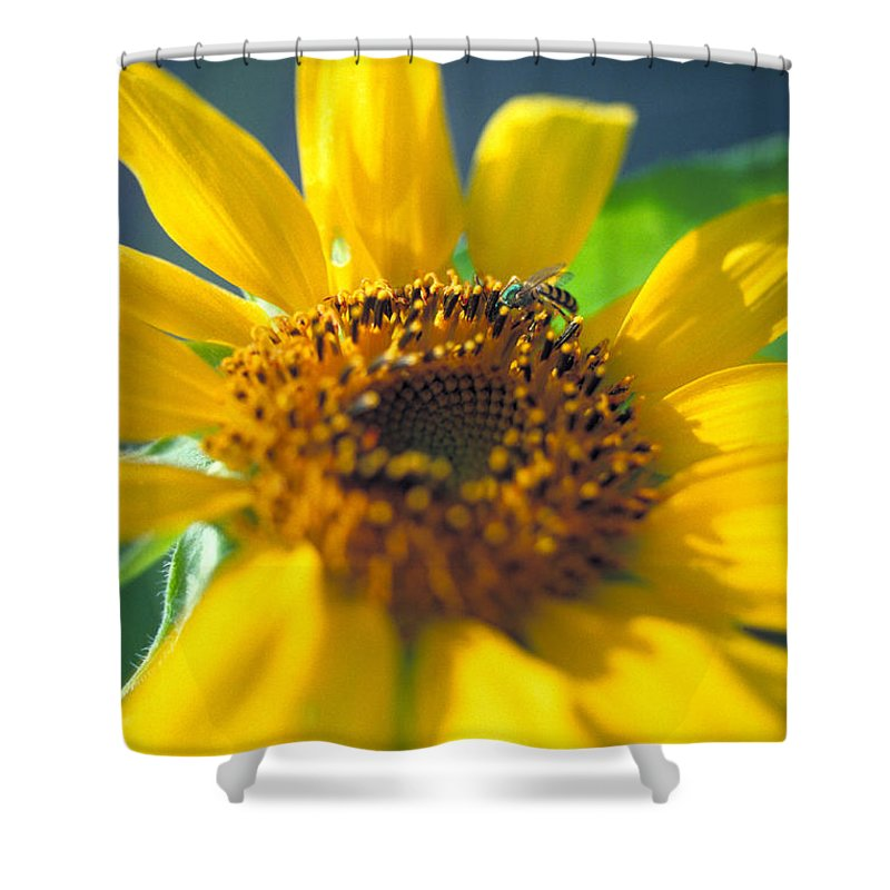 Sunflower Shower Curtain featuring the photograph Sunflower And Bee Number Two by Thomas Firak