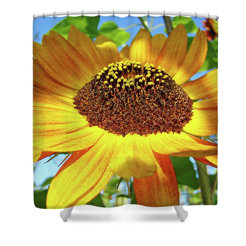 Sunflower Shower Curtain featuring the photograph Sunflower Art Prints Sun Flowers Gilcee Prints Baslee Troutman by Baslee Troutman
