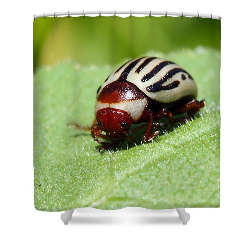 Bug Shower Curtain featuring the photograph Sunflower Beetle by Teresa Zieba