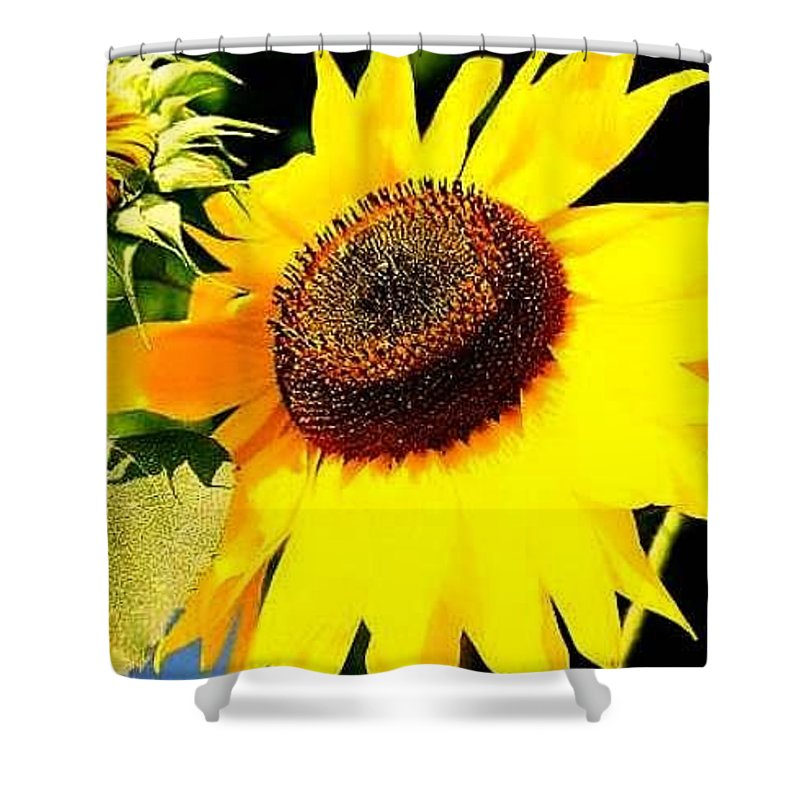 Shower Curtain featuring the photograph Sunflower by FD Graham