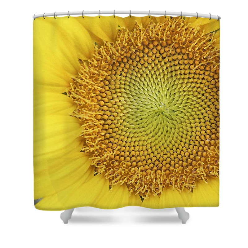 Sunflower Shower Curtain featuring the photograph Sunflower by Margie Wildblood
