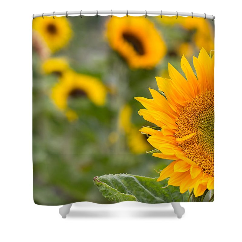 Colourful Shower Curtain featuring the photograph Sunflower by Milton Cogheil