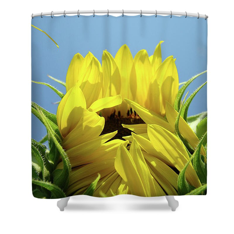 Sunflower Shower Curtain featuring the photograph Sunflower Opening Sunny Summer Day 1 Giclee Art Prints Baslee Troutman by Baslee Troutman