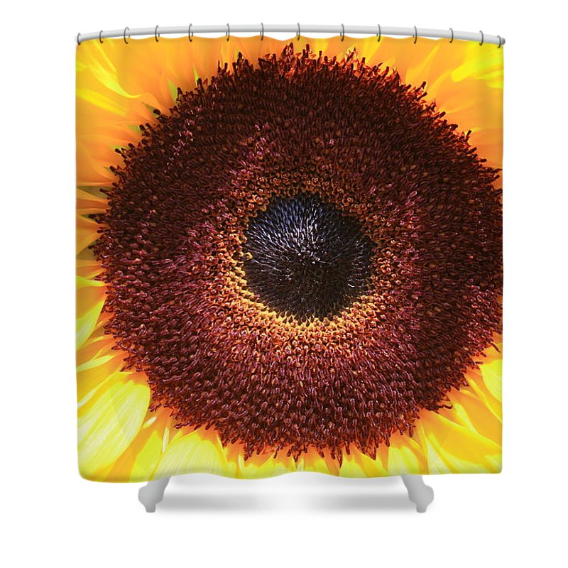 Sunflower Shower Curtain featuring the photograph Sunflower by Shirin Shahram Badie