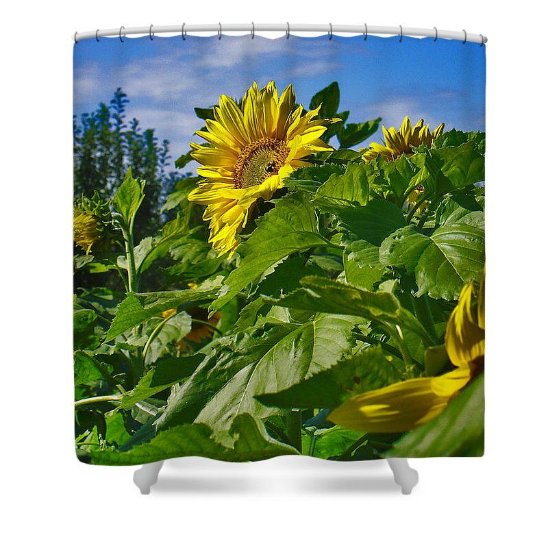 Flowers Shower Curtain featuring the photograph Sunflower by Steve Karol