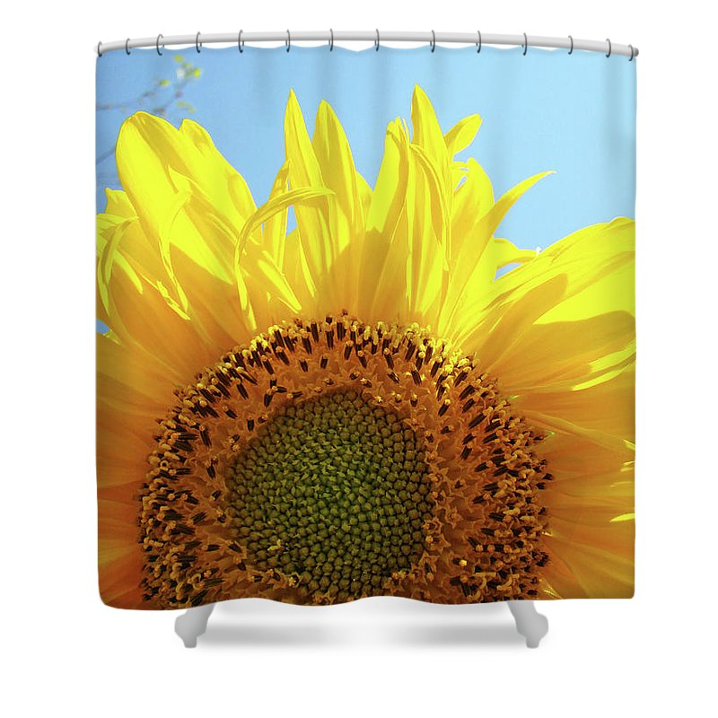 Sunflower Shower Curtain featuring the photograph Sunflower Sunlit Sun Flowers Giclee Art Prints Baslee Troutman by Baslee Troutman