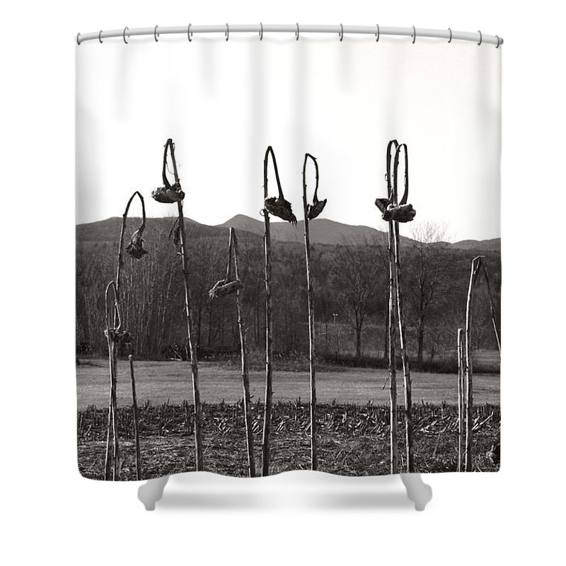 Shower Curtain featuring the photograph Sunflower Swingset by Heather Kirk