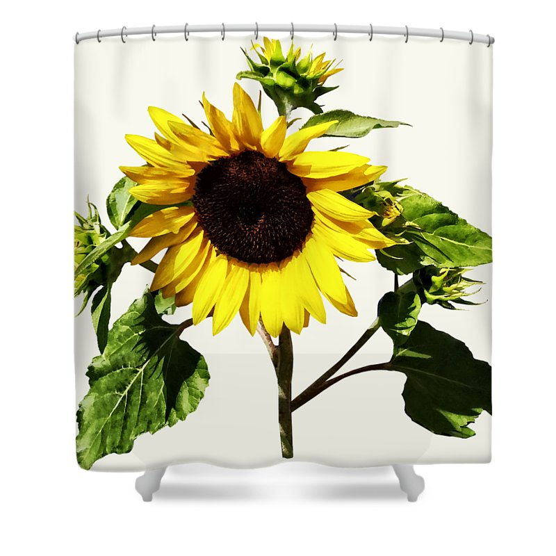 sunflower taking a bow shower curtain for sale by susan savad. Black Bedroom Furniture Sets. Home Design Ideas