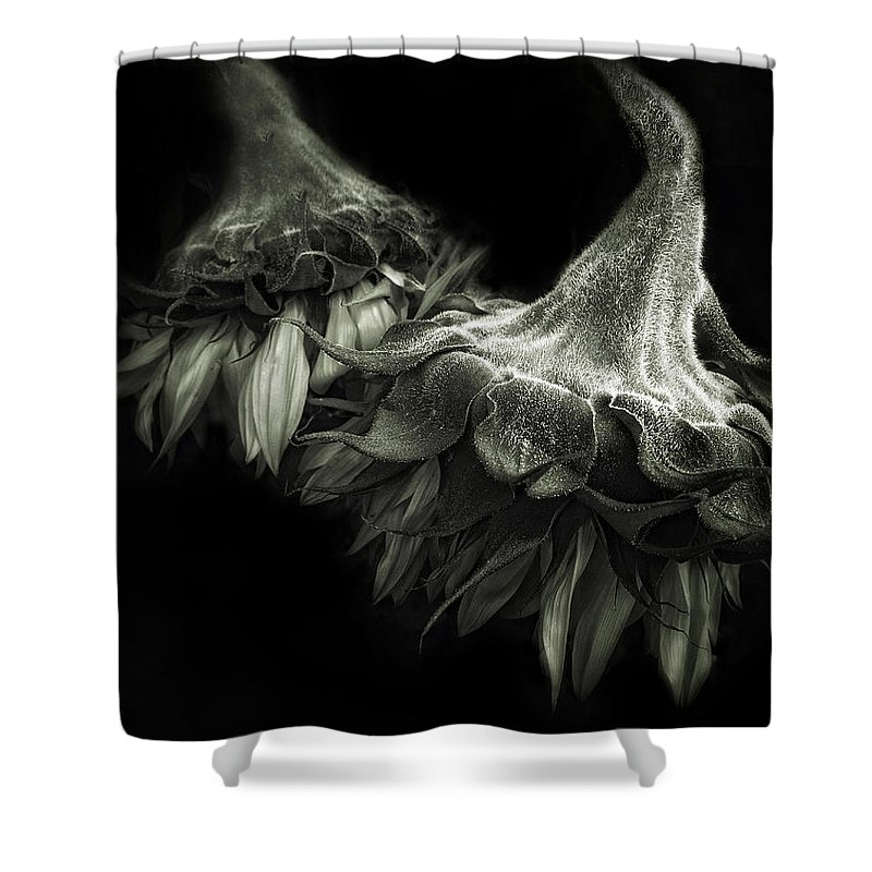 Flowers Shower Curtain featuring the photograph Sunflower Tango by Jessica Jenney