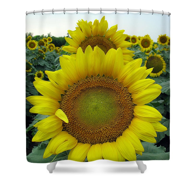 Sunflowers Shower Curtain featuring the photograph Sunflowers by Amanda Barcon