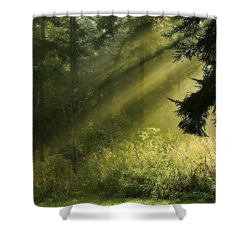 Nature Shower Curtain featuring the photograph Sunlight by Daniel Csoka
