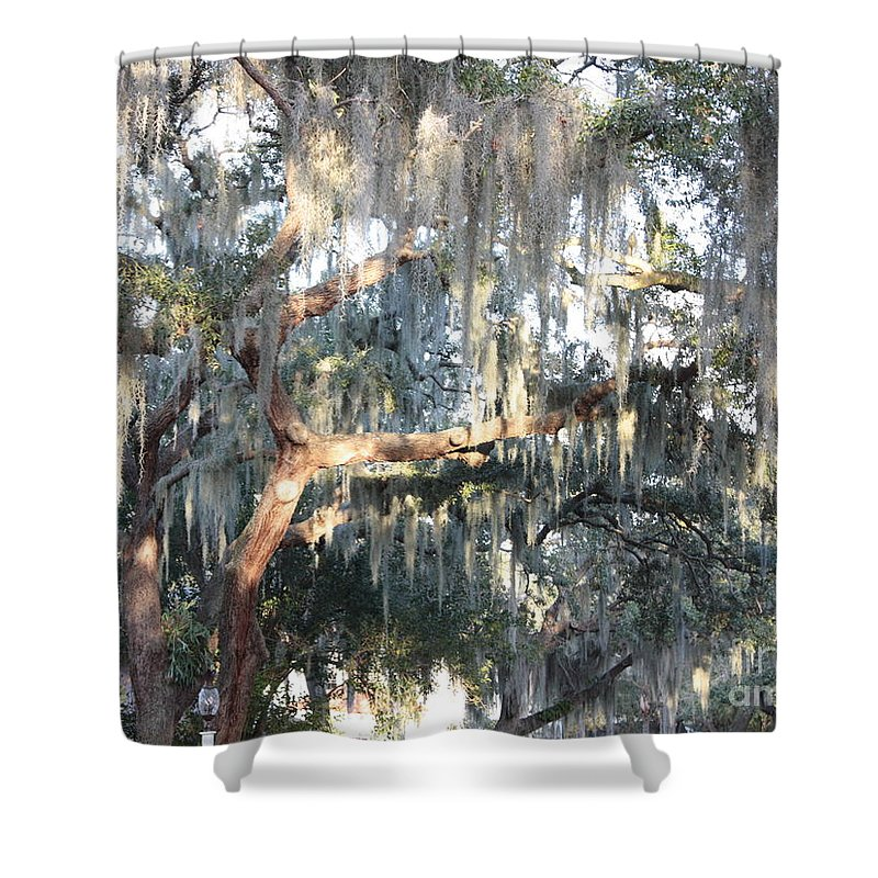 Spanish Moss Shower Curtain featuring the photograph Sunlight On Mossy Tree by Carol Groenen