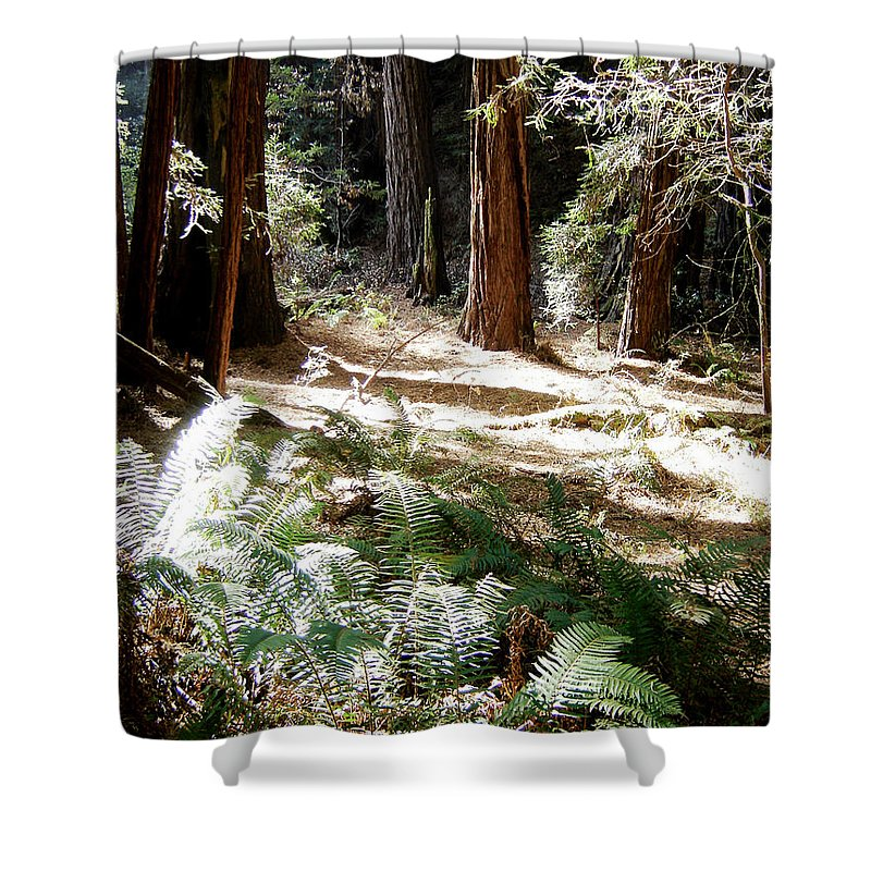 Sunlight Shower Curtain featuring the photograph Sunlight On Path by Mary Rogers