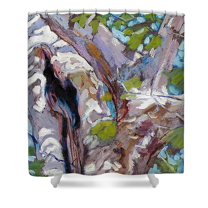 Tree Shower Curtain featuring the painting Sunlight On Sycamore by John Lautermilch
