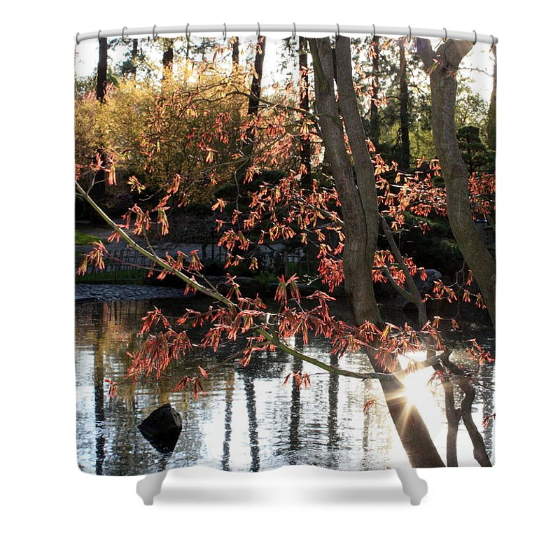 Maple Tree Shower Curtain featuring the photograph Sunlight Through Japanese Maple by Carol Groenen