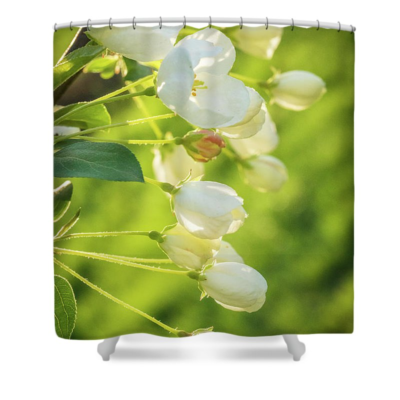 Sunlit Shower Curtain featuring the photograph Sunlit by Debbie Gracy