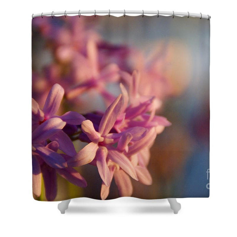 Pink Shower Curtain featuring the photograph Sunlit Dream by Linda Shafer