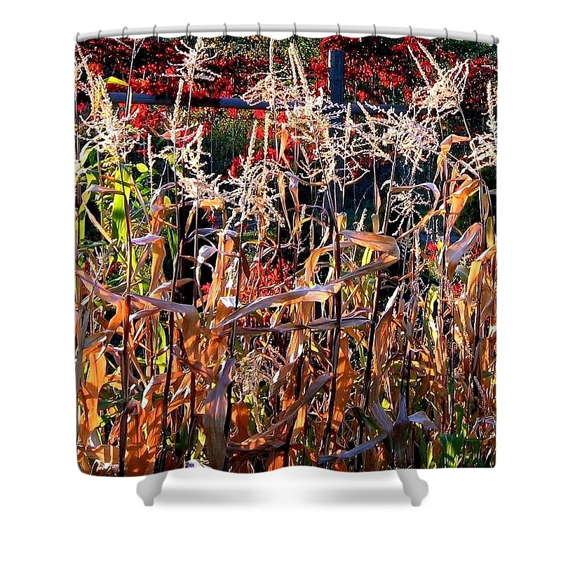 Fall Shower Curtain featuring the photograph Sunlit Fall Corn by Will Borden