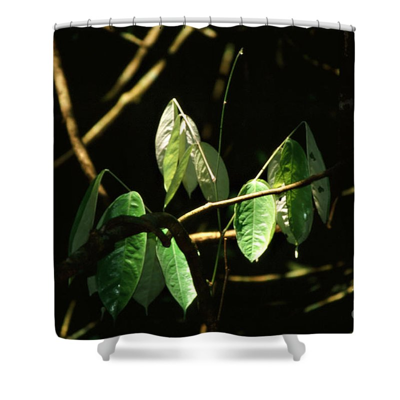 Leaves Shower Curtain featuring the photograph Sunlit Leaves by Kathy McClure