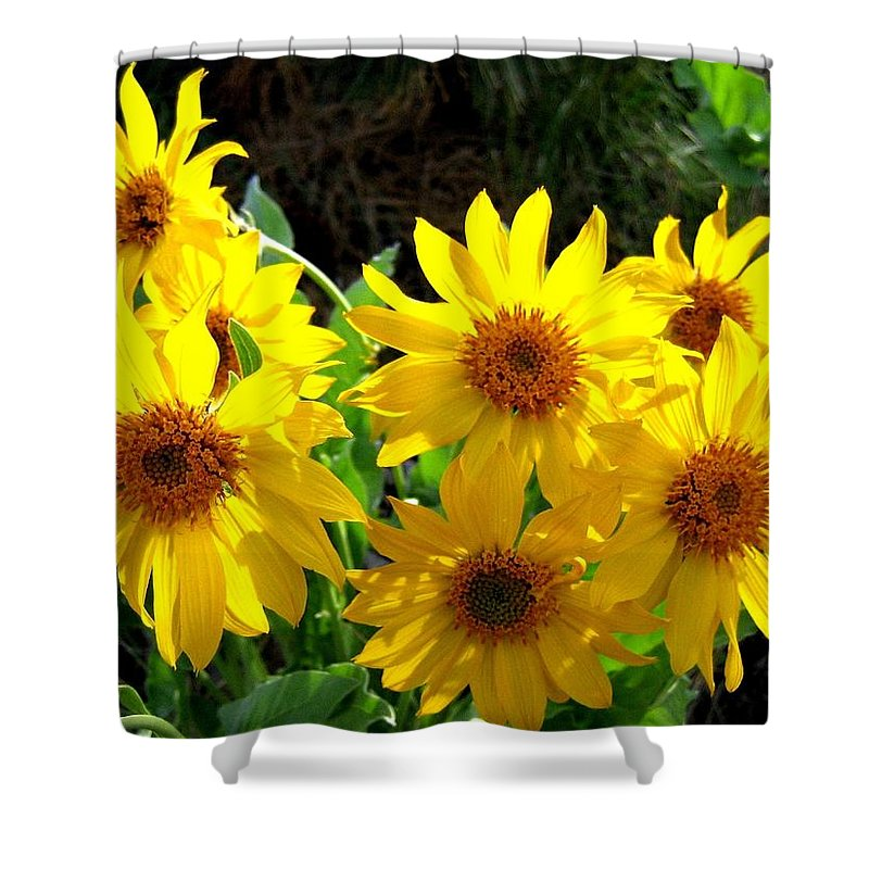 Wildflowers Shower Curtain featuring the photograph Sunlit Wild Sunflowers by Will Borden