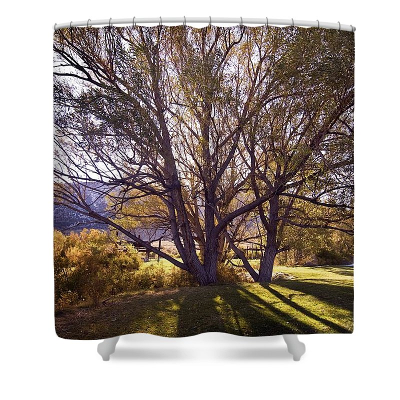 Western Scenes Shower Curtain featuring the photograph Sunny Mono Tree by Norman Andrus