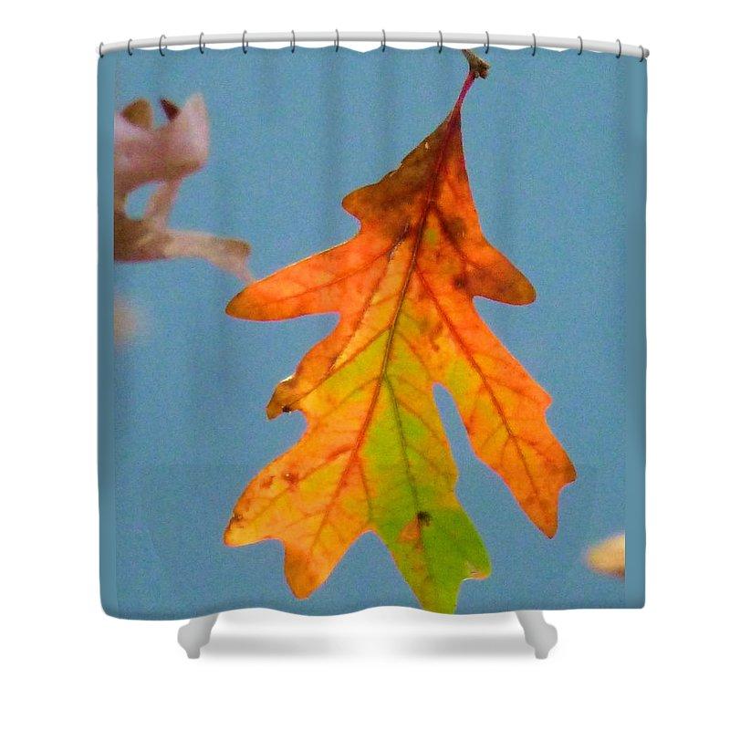 Sky Shower Curtain featuring the photograph Sunny Oak Leaf by Melinda Marsh