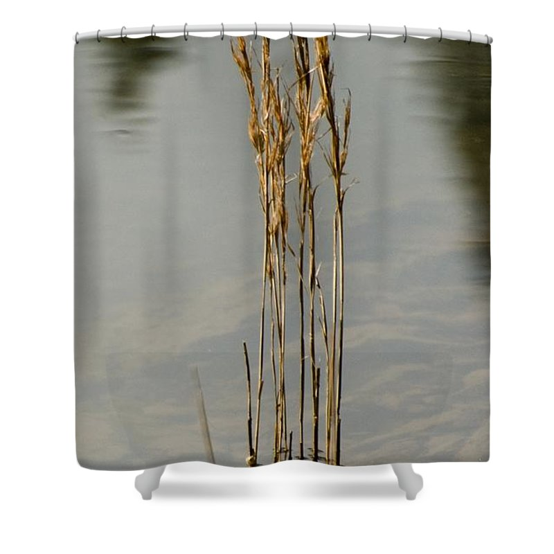 California Scenes Shower Curtain featuring the photograph Sunny Reeds Reflect by Norman Andrus
