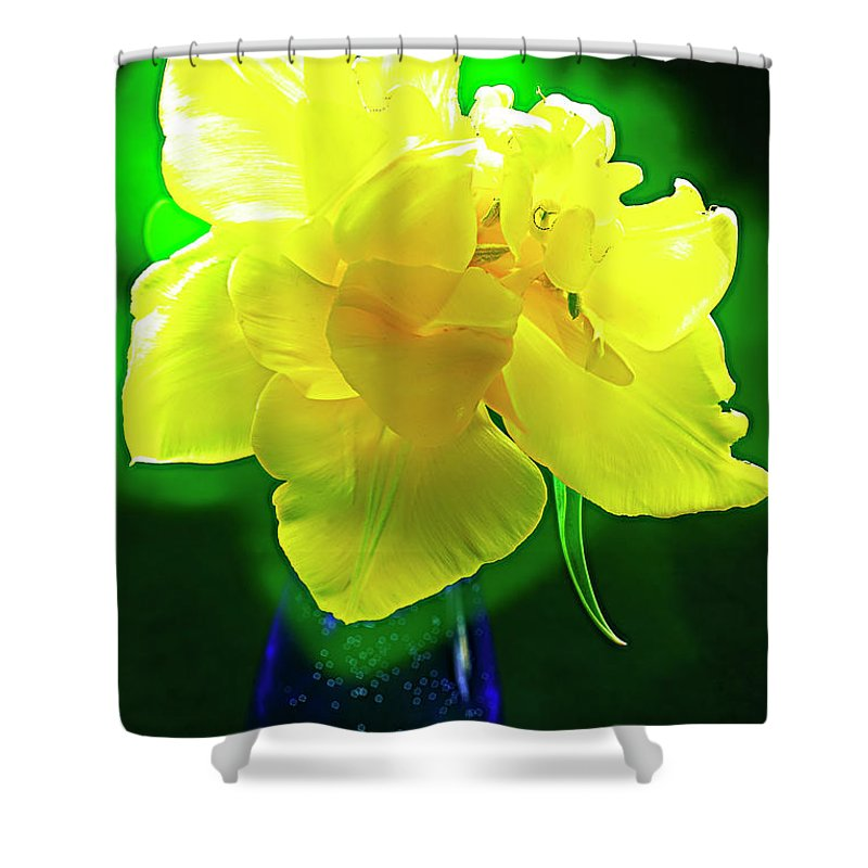 Sunny Tulip Shower Curtain featuring the photograph Sunny Tulip In Vase. by Alexander Vinogradov
