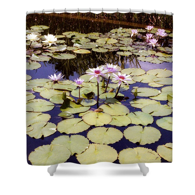 Floral Shower Curtain featuring the photograph Sunny Waterlilies by Jan Amiss Photography