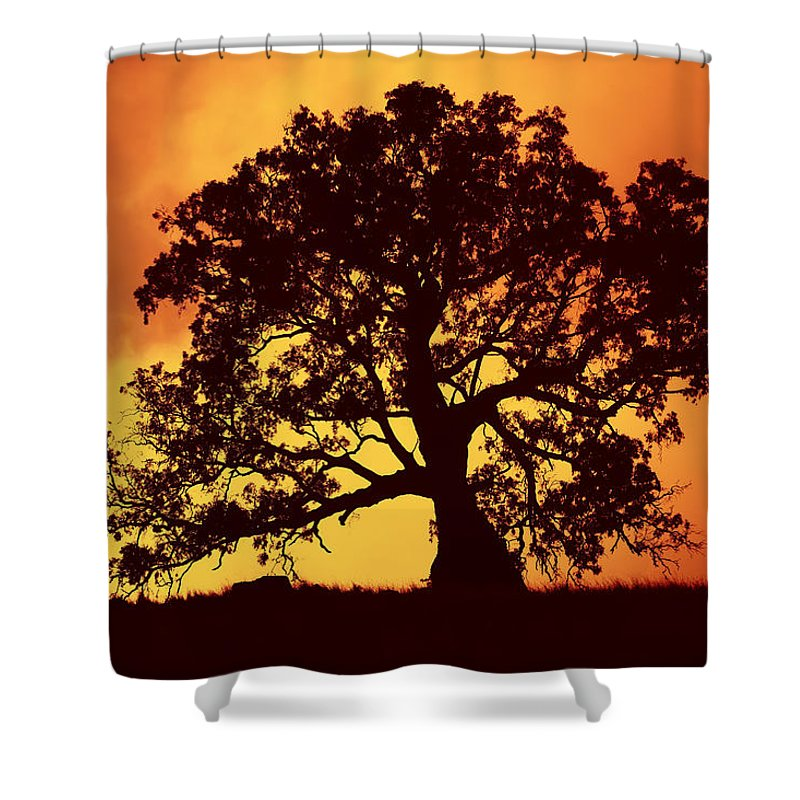 Gum Tree Shower Curtain featuring the photograph Sunrise Gum by Mike Dawson