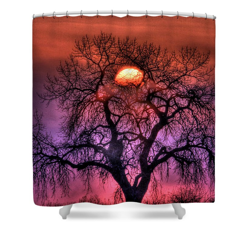 Sunrise Shower Curtain featuring the photograph Sunrise Through The Foggy Tree by Scott Mahon