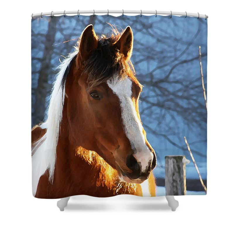 Horse Shower Curtain featuring the photograph Sunset Paint by Frank Guemmer