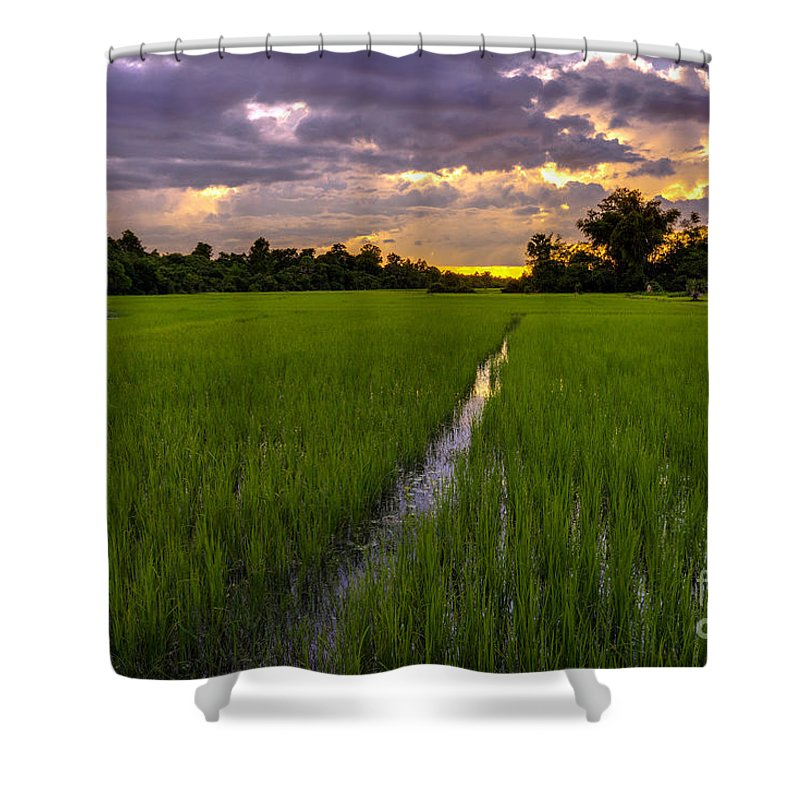 Sunrise Shower Curtain featuring the photograph Sunset Rice Fields In Cambodia by Mike Reid