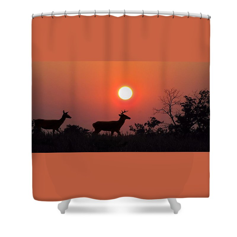 Sunset Shower Curtain featuring the photograph Sunset Silhouette by David Dehner