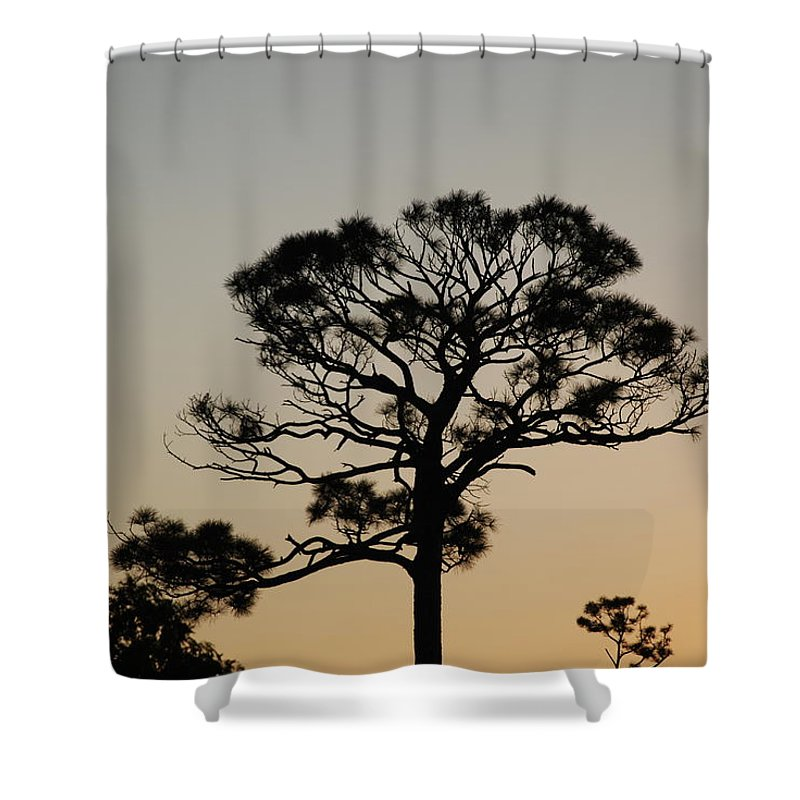 Tree Shower Curtain featuring the photograph Sunsetting Thru The Trees by Rob Hans