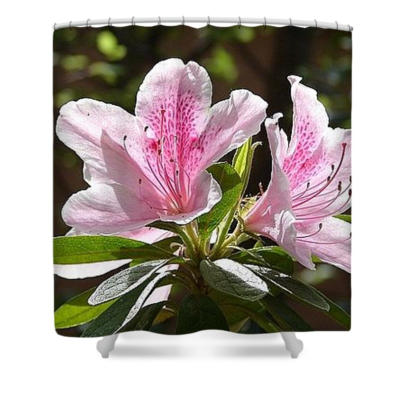 Lily Pinkgreen Pedals Leaves Shower Curtain featuring the photograph Sunshine by Luciana Seymour
