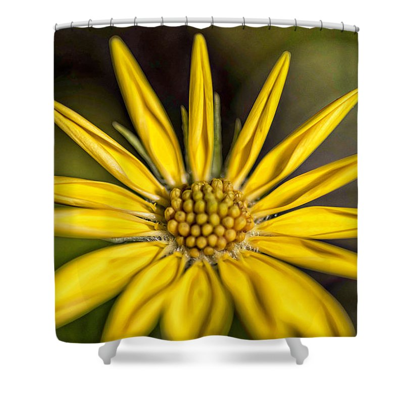 Shower Curtain featuring the photograph Sunshine On A Stem by Wendy Carrington