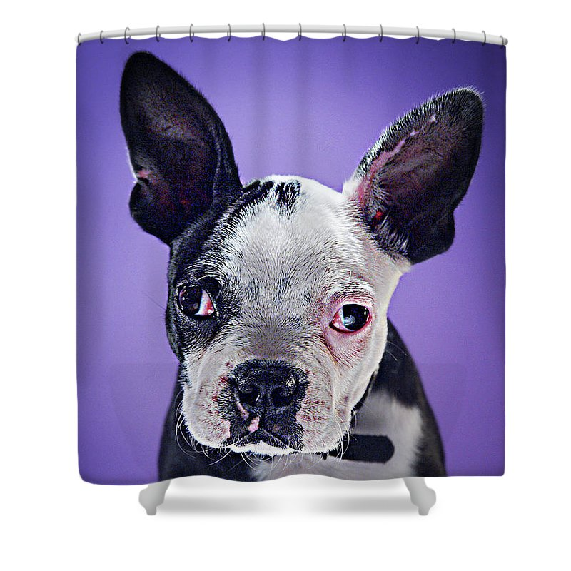 Pets Shower Curtain featuring the photograph Super Pets Series 1 - Bugsy Close Up by Arturo Parada