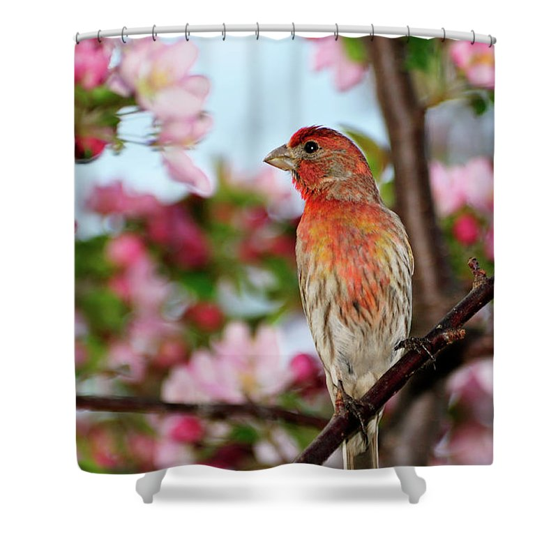 House Finch Shower Curtain featuring the photograph Surrounded by Betty LaRue
