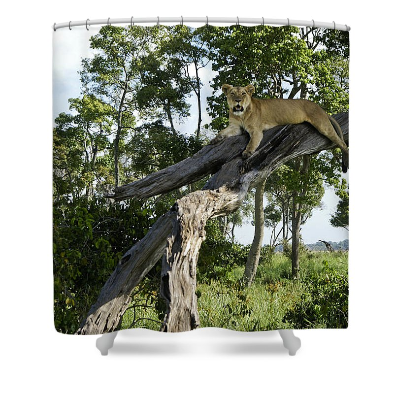Africa Shower Curtain featuring the photograph Surveying The Plains by Michele Burgess